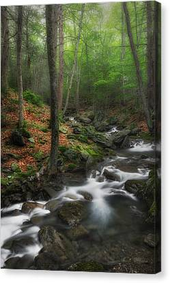 Western Ma Canvas Print - Ethereal Forest by Bill Wakeley