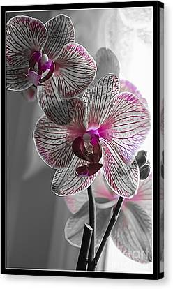 Ethereal Orchid Canvas Print