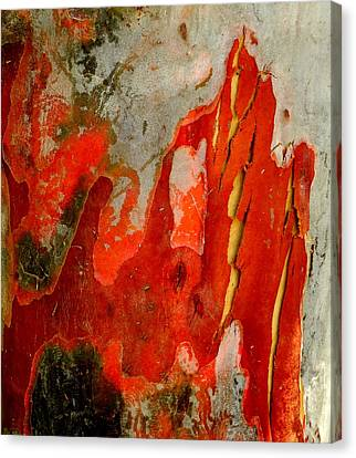 Eucalyptus Bark Canvas Print by Peter Mooyman
