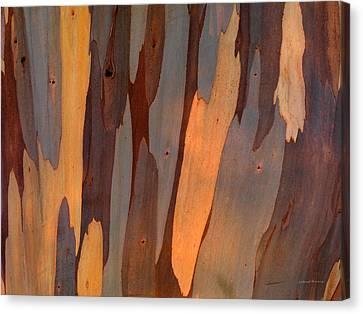 Eucalyptus Form 6 Canvas Print by Leland D Howard
