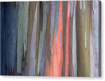 Eucalyptus Tree Bark Canvas Print by Karon Melillo DeVega