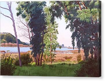 Eucalyptus Trees At Batiquitos Lagoon Canvas Print