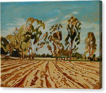 Eucalypus Trees Near Bloemfontein Canvas Print by Thomas Bertram POOLE