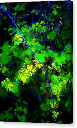 Euphoric Vine Canvas Print