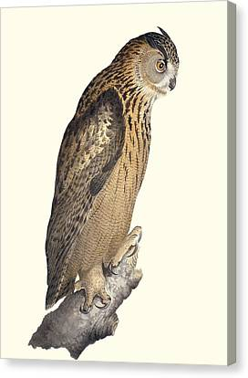 Eurasian Eagle-owl, 19th Century Artwork Canvas Print by Science Photo Library