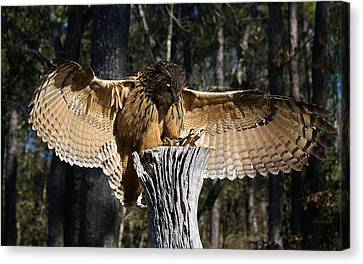 Eurasian Eagle Owl Coveting His Prey Canvas Print by Paulette Thomas