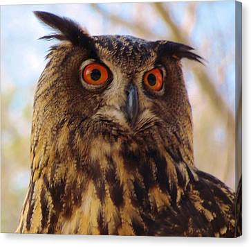 Canvas Print featuring the photograph Eurasian Eagle Owl by Cynthia Guinn