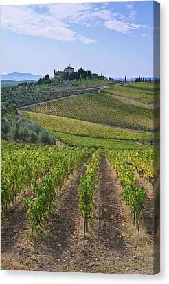 Europe, Italy, Tuscany, Chianti Canvas Print by Rob Tilley