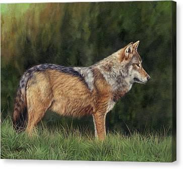 European Grey Wolf Canvas Print