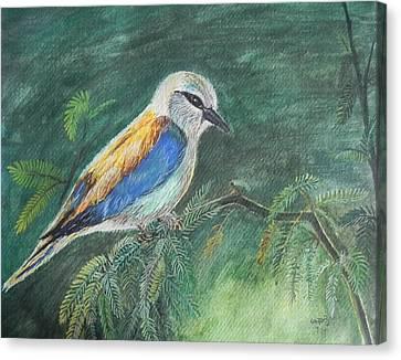 European Roller Canvas Print by Usha Rai