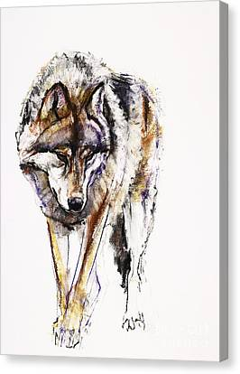 European Wolf Canvas Print by Mark Adlington