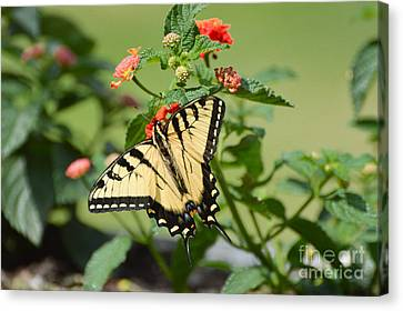 Evening Beauty Canvas Print by Debbie Green