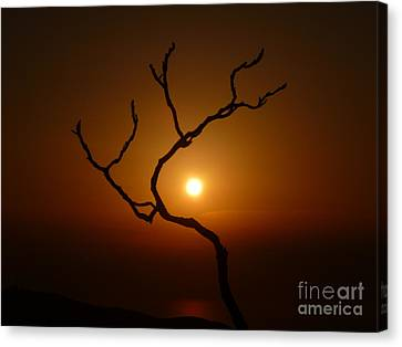 Evening Branch Original Canvas Print