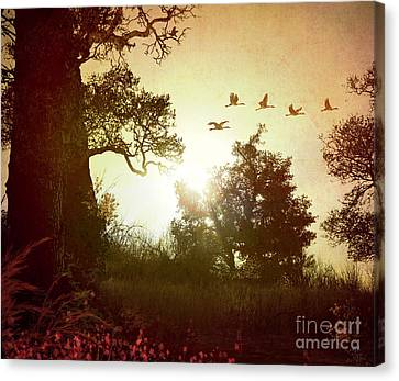 Evening Flying Geese Canvas Print by Peter Awax