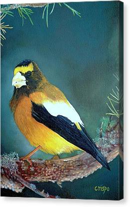 Evening Grosbeak Canvas Print by Jean Yves Crispo