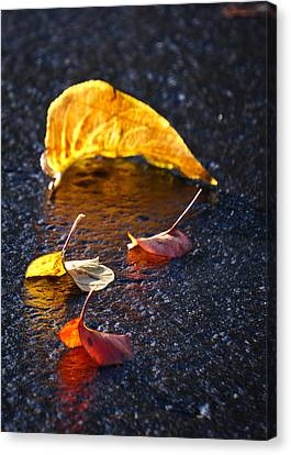 Evening Leaves On Wet Pavement Canvas Print by Ronda Broatch