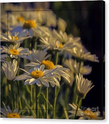 Evening Light Canvas Print by Jean OKeeffe Macro Abundance Art