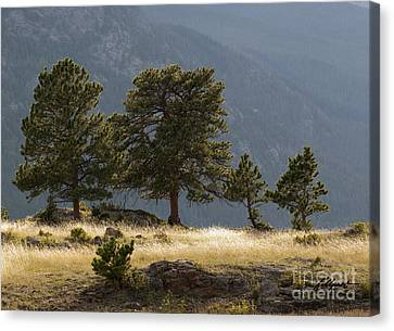 Evening Light On The Meadow Canvas Print