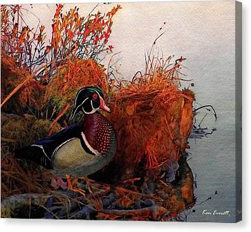 Evening Light Wood Duck Canvas Print by Ken Everett