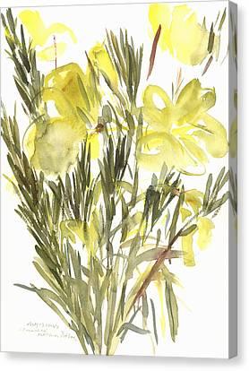 Evening Primroses Canvas Print by Claudia Hutchins-Puechavy
