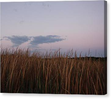 Evening Rushes Canvas Print by Amanda Holmes Tzafrir
