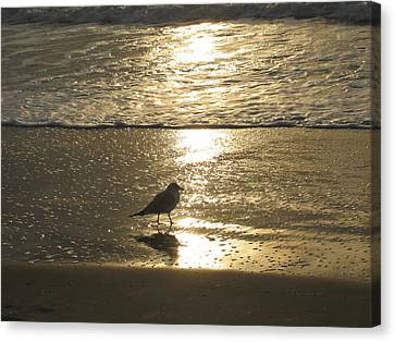 Evening Stroll For One Canvas Print by Judith Morris