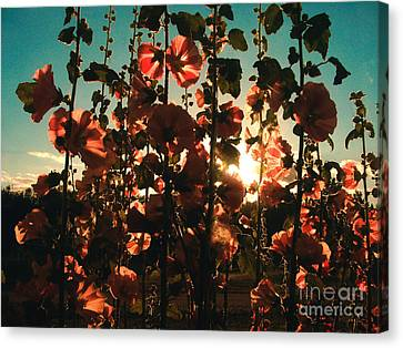 Evening Sun Canvas Print by Connie Ens
