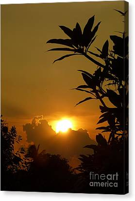 Evening Sun Canvas Print