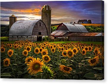 The Horse Canvas Print - Evening Sunflowers by Debra and Dave Vanderlaan
