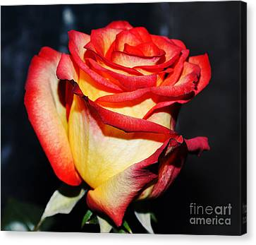 Event Rose 3 Canvas Print by Felicia Tica