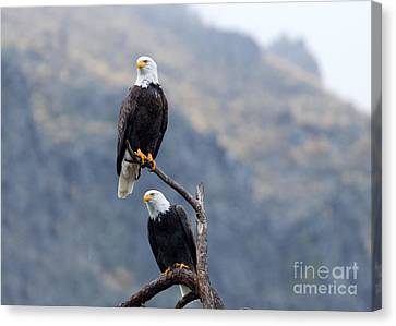 Ever Watchful Canvas Print by Mike Dawson