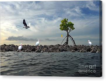 Canvas Print featuring the photograph Everglade Scene by Dan Friend