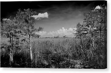 Everglades 1909bw Canvas Print