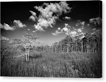 Everglades 9574bw Canvas Print