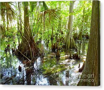 Everglades Canvas Print by Carey Chen