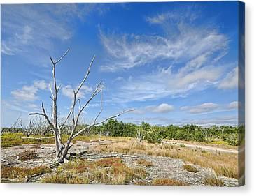Everglades Coastal Prairies Canvas Print by Rudy Umans