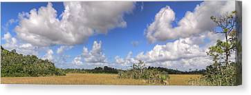 Everglades Landscape Panorama Canvas Print by Rudy Umans