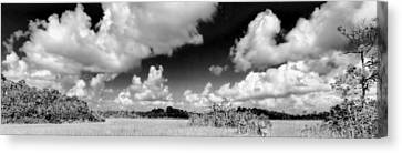 Everglades Panorama Canvas Print by Rudy Umans