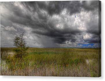 Everglades Storm Canvas Print by Rudy Umans