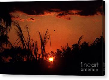 Everglades Sunset Canvas Print by Steven Valkenberg