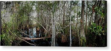 Everglades Swamp-1 Canvas Print by Rudy Umans