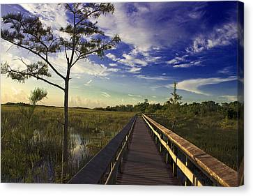 Everglades  Canvas Print by Swank Photography