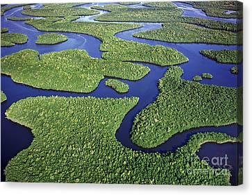 Everglades Waterways Canvas Print