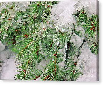 Evergreen Icicles I Canvas Print by Chuck Flewelling