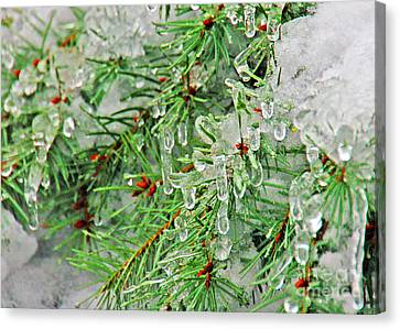 Evergreen Icicles II Canvas Print by Chuck Flewelling