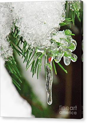 Evergreen Icicles Iv Canvas Print by Chuck Flewelling