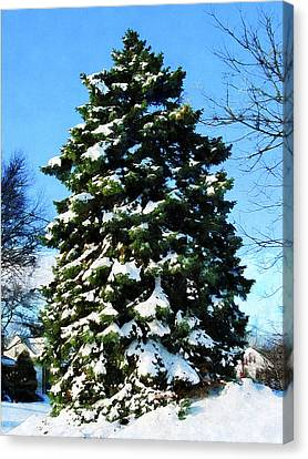 Evergreen In Winter Canvas Print by Susan Savad