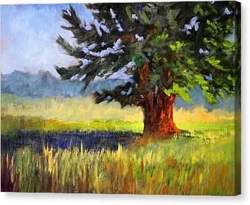 Fir Trees Canvas Print - Evergreen by Nancy Merkle