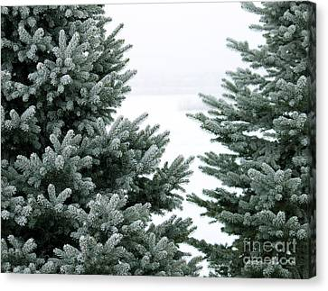 Evergreens Canvas Print by Debbie Hart