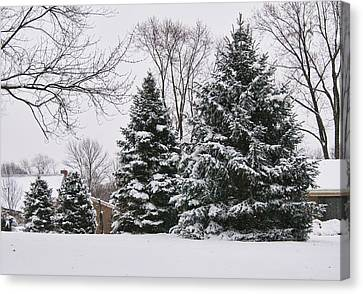 Evergreens In The Snow Canvas Print
